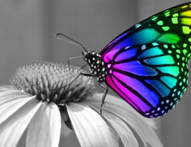 The Butterfly Effect Manifesto
